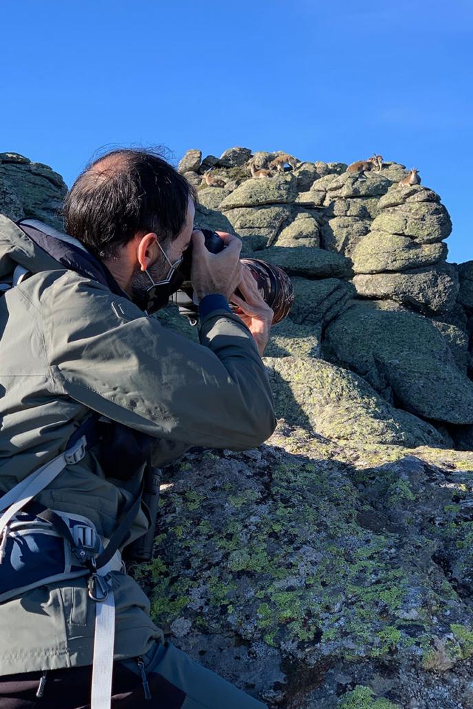 Ruta de fotografía de cabra montés