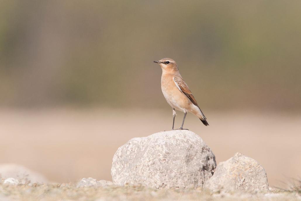 Observación de aves acuáticas