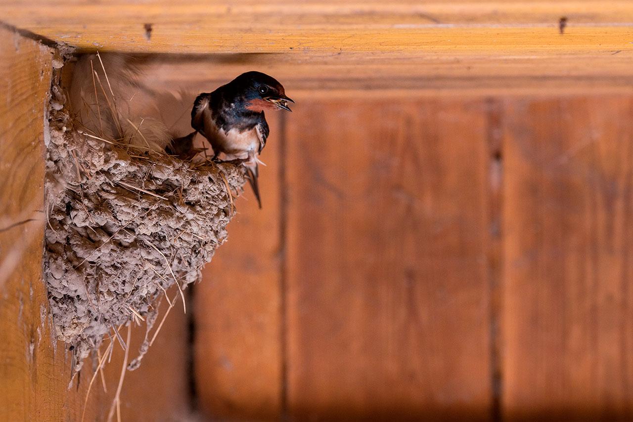 Taller de aves insectívoras