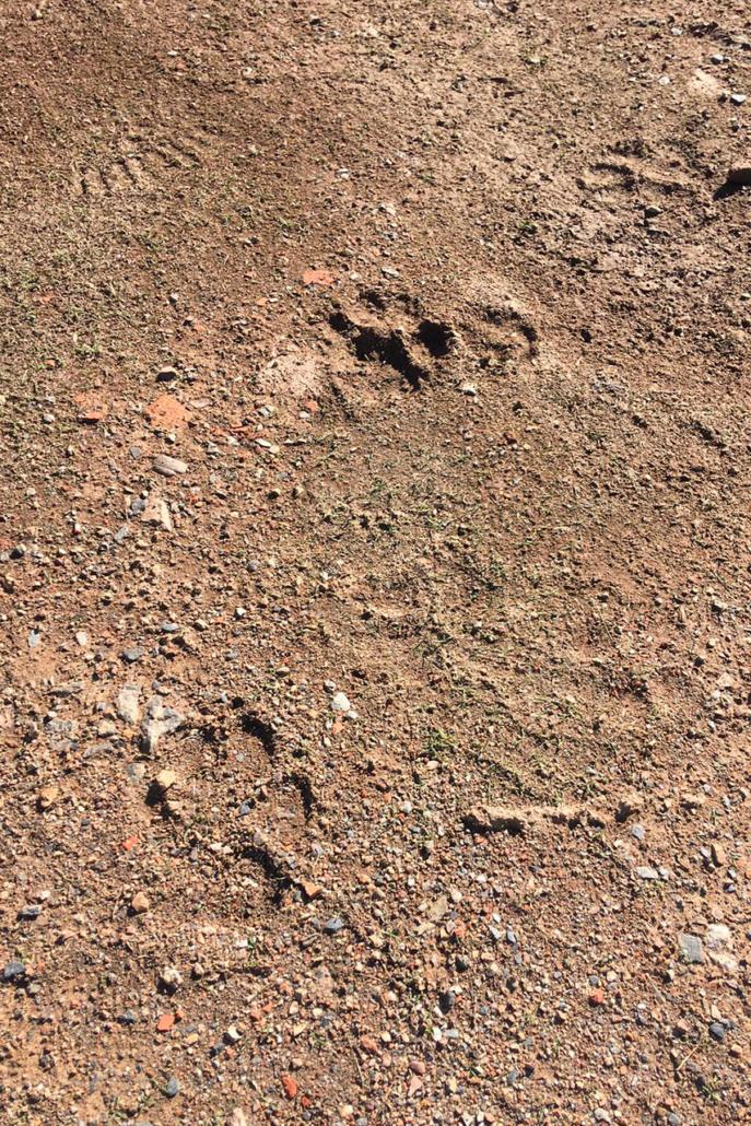 Experiencia lobo - Viaje de observación del lobo ibérico
