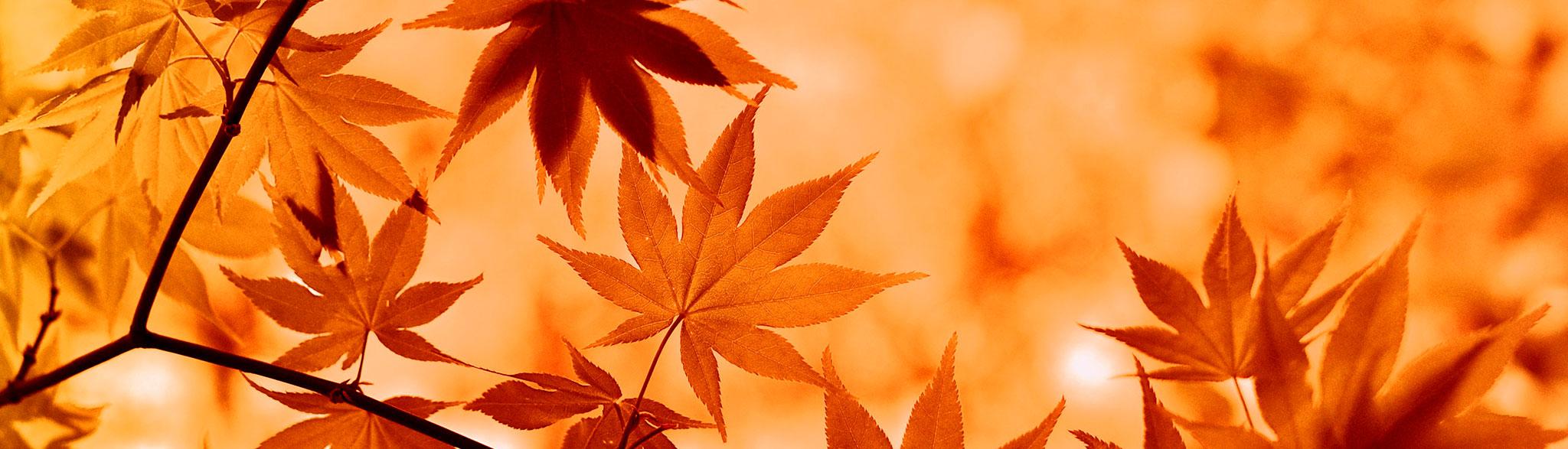 Taller de otoño